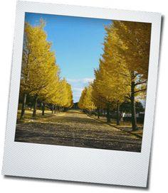 無料の画像加工編集サイト・フリーソフト
