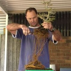 Root Pruning and Re-potting 1