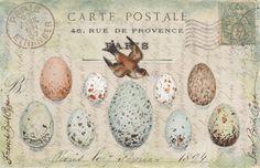 carte postale by MaryJo Koch, California.  #birds #nest