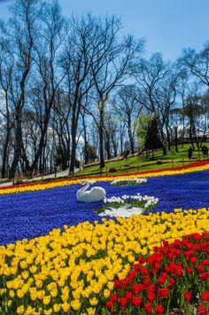 Istanbul, moi et 8 670 035 tulipes - Le Petit Explorateur