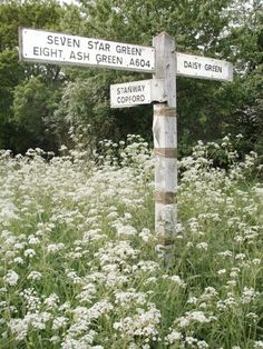 Signpost in Essex countryside Queen Anne's Lace Flowers, Wild Flowers, Queen Annes Lace, English Countryside, Essex Countryside, British Isles, Country Life, Country Living, Landscape