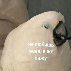 You don't love me; Cute Love Memes, Funny Cute, Stupid Memes, Funny Jokes, Reaction Pictures, Funny Pictures, Very Funny Texts, Hello Memes, Russian Memes