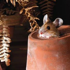 little mouse in the clay pot ...potting shed