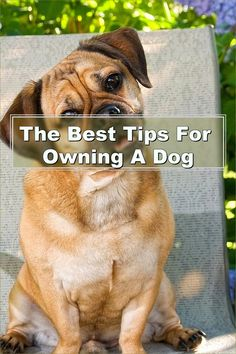 It is a great idea to put hand signals in use when you are training your pet; use them in conjunction with words. Your dog can figure out things easier when they get these signals. Experiment with each way and determine what works. Pet Care Tips, Dog Care, Pet Dogs, Dogs And Puppies, Pets, Hand Signals, Dog Training Tips, Experiment, Dog Lovers