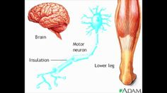 CNS and Nerve Conduction - Animation - MADE EASY