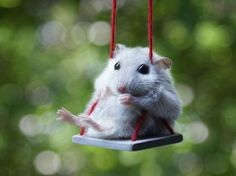 I can't show my kids this one- not w/ 2 tortured hamsters already! By the by- Barbie clothes Do fit hamsters (w/ minor adjustments) Cute Baby Animals, Animals And Pets, Funny Animals, Small Animals, Animals Tumblr, Exotic Animals, Animal Babies, Funny Hamsters, Dwarf Hamsters