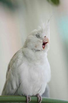 26 Photos of Beautiful Yawning Animals to Put You To Sleep Funny Birds, Cute Birds, Pretty Birds, Beautiful Birds, Animals Beautiful, Animals And Pets, Baby Animals, Funny Animals, Cute Animals