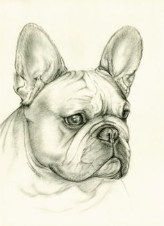 Dog Pencil Drawing, Pencil Drawings Of Animals, Animal Sketches, Art Drawings Sketches, Cute Drawings, French Bulldog Drawing, Lion Illustration, Animal Doodles, Custom Dog Portraits