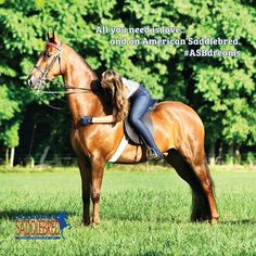 LOve this picture<<< Rights to American Saddlebred Horse Association