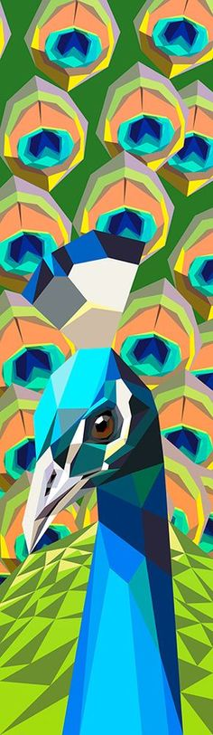 Peacock - Liam Brazier Illustration & Animation