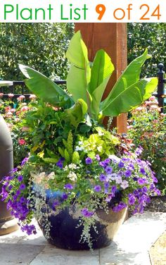 24 designer plant lists for beautiful container gardens & colorful mixed flower pots combinations: great patio planting ideas & backyard landscape designs! – A Piece of Rainbow #backyard #gardens #gardening #gardeningtips #urbangardening #gardendesign #gardenideas #containergardening #diy #summer #spring #porch #patiodesigns #patio #curbappeal