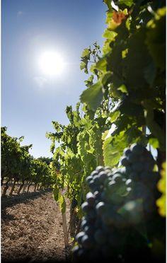 En Provence, à 400 mètres d'altitude, avec une exposition Sud-Sud ouest... une situation exceptionnelle pour produire des vins bio de grande qualité