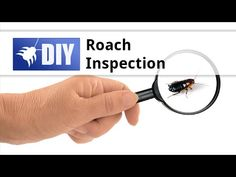 Where do cockroaches hide? How do you find cockroaches? This video highlights the different places to check and the common signs of a roach infestation. For a step-by-step guide to treating roaches yourself, click here: https://www.pinterest.com/pin/237635317814263067/ For more information about inspecting for roaches, click here: http://www.domyownpestcontrol.com/cockroach-inspection-guide-a-457.html