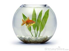 Goldfish bowl - this would be beautiful for the escort card display - but would have to make sure fish does not suffer and go back to aquarium store afterwards.