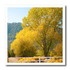 3dRose - Jos Fauxtographee Pine Valley - A tree that is yellow in the early fall in Pine Valley, Utah - Iron on Heat Transfers