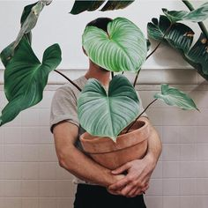 Boy: Plant: Maggie the What have you named your favourite plant? Plants Are Friends, Plant Aesthetic, Cactus Y Suculentas, Green Life, Houseplants, Cactus Plants, Indoor Plants, Planting Flowers, Plant Leaves