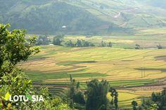 Visiter le Vietnam nord ouest, la région montagneuse de la province Hoa Binh, Son La et Yen Bai