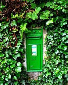 Irish Ivy Post - Original Signed Fine Art Photograph. $30.00, via Etsy.