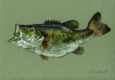 8x11 Largemouth Bass Fish River Fishing Fly Original Art Watercolor Juan Bosco | eBay