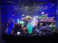 A group members beautiful glofish tank (group members)