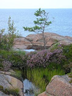 GETA, Åland,Finland - Tiny rock pools with their natural vegetation near Havsvidden in the commune of Geta. With Linda Olsson in The Memory of Love. Beautiful Islands, Beautiful World, Rock Pools, Biomes, Baltic Sea, Archipelago, Helsinki, Norway, Places To Go