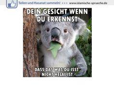 Geschockter Koala http://islamische-sprueche.de/meme-zitate/geschockter-koala/
