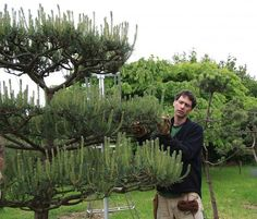 Pruning Tuition, Image: #1