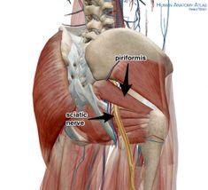 PIriformis and Sciatic Nerve Yoga Anatomy