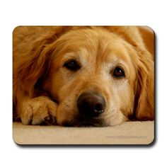 Golden Retriever Mousepad By Martin Beebee Photography Dogs Dog