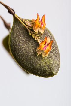 lepanthes wageneri - Szukaj w Google Orchids, Coin Purse, Urban, Warm, Purses, Landscape, Mini, Garden, Google