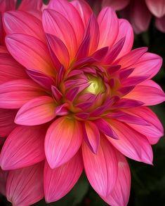 Pretty Pictures, Rose, Garden, Plants, Painting, Instagram, Ph, Congratulations, Paint Flowers
