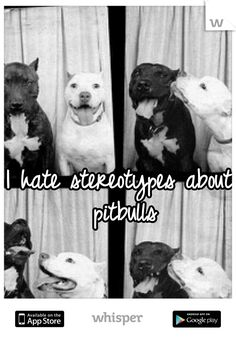 I hate stereotypes about pitbulls .... i love my pit so fck all yall that are haters