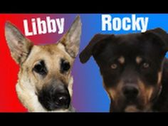 Rocky & Libby. PLEASE NOTE: These rescues are handled by highly trained professionals. Please share this video and help support this great cause, and help all animals who are rescued to find a loving, permanent home. Websites: www.hopeforpaws.org (Company) & www.billfoundatio... (Application for Adoption).