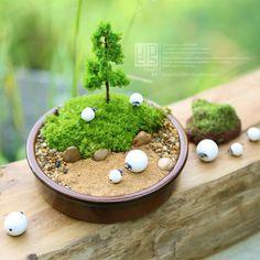 小羊苔藓微景观