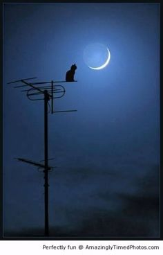 Le chat parle à la lune / The cat speaks to the moon. Crazy Cat Lady, Crazy Cats, Beautiful Moon, Beautiful Things, Nocturne, Blue Moon, Stars And Moon, Stars At Night, I Love Cats