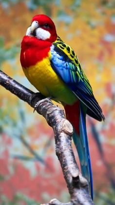 Parrot via Paradise of Birds. Colors of the rainbow                                                                                                                                                      More
