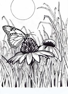 difficult coloring pages for adults butterfly on coneflower with grass and sun