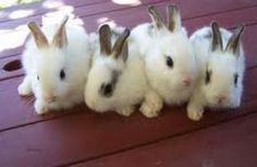 What to Feed Baby Rabbits?