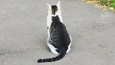 Il gatto nel gatto: L'effetto ottico lascia di stucco