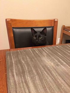 my cat sits at the breakfast table with me in the mornings - Click the PIN to see more!