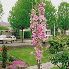 Before You Work On Your Home's Landscape, Consider Adding a Koi Pond Don't let your fear of landscaping keep you from having the best looking house on the block. Cherry Blossom Tree, Blossom Trees, Cherry Tree, Blossom Garden, Colorful Flowers, Pink Flowers, Replant, Deciduous Trees, Edible Plants