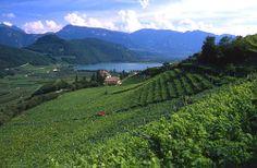 Cantine Ritterhof - Grandi Vini del Trentino Alto Adige