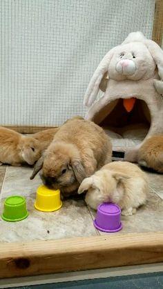 Rabbit Toys, Pet Rabbit, Rabbit Treats, House Rabbit, Cute Little Animals, Cute Funny Animals, Pet Bunny Rabbits, Dwarf Bunnies, Diy Bunny Toys