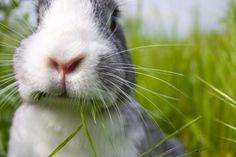 6 Ways that Starting to Raise Meat Rabbits Will Make You More Self-Sufficient