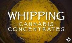 Cannabis Concentrates Experiment: The Effects Of Whipping By Nugrun Concentrates