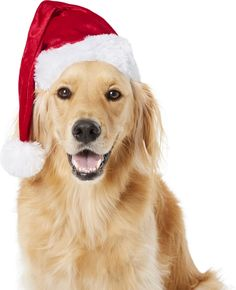 Frisco Deluxe Holiday Santa Hat Dog & Cat Costume, X-Large/XX-Large - Chewy.com