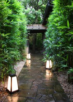 "Japanese garden ""Wet & welcoming"" KB"