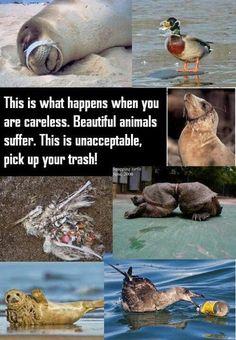 Foto: This is what happens when you are careless. Beautiful animals suffer. This is unacceptable, pick up your trash!! -- C'est ce qui arrive quand vous êtes négligent. De beaux animaux souffrent. C'est inacceptable, ramasser vos déchets!