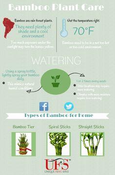 How to water and properly care for a Feng Shui Lucky Bamboo! It's easy! It just takes a couple of minutes… Care for your own here: www. Lucky Bamboo Care, Bamboo Plant Care, Snake Plant Care, Lucky Bamboo Plants, Feng Shui Lucky Bamboo, Feng Shui Garden Design, Forest Plants, Creating Positive Energy, Fence Landscaping