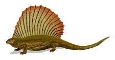 Edaphosaurus | Description Edaphosaurus BW.jpg https://nl.pinterest.com/noviacetus/mammal-like-reptiles/